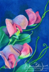 Sweet Peas, oil pastel