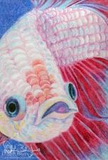 Portrait of Pinot, crayon